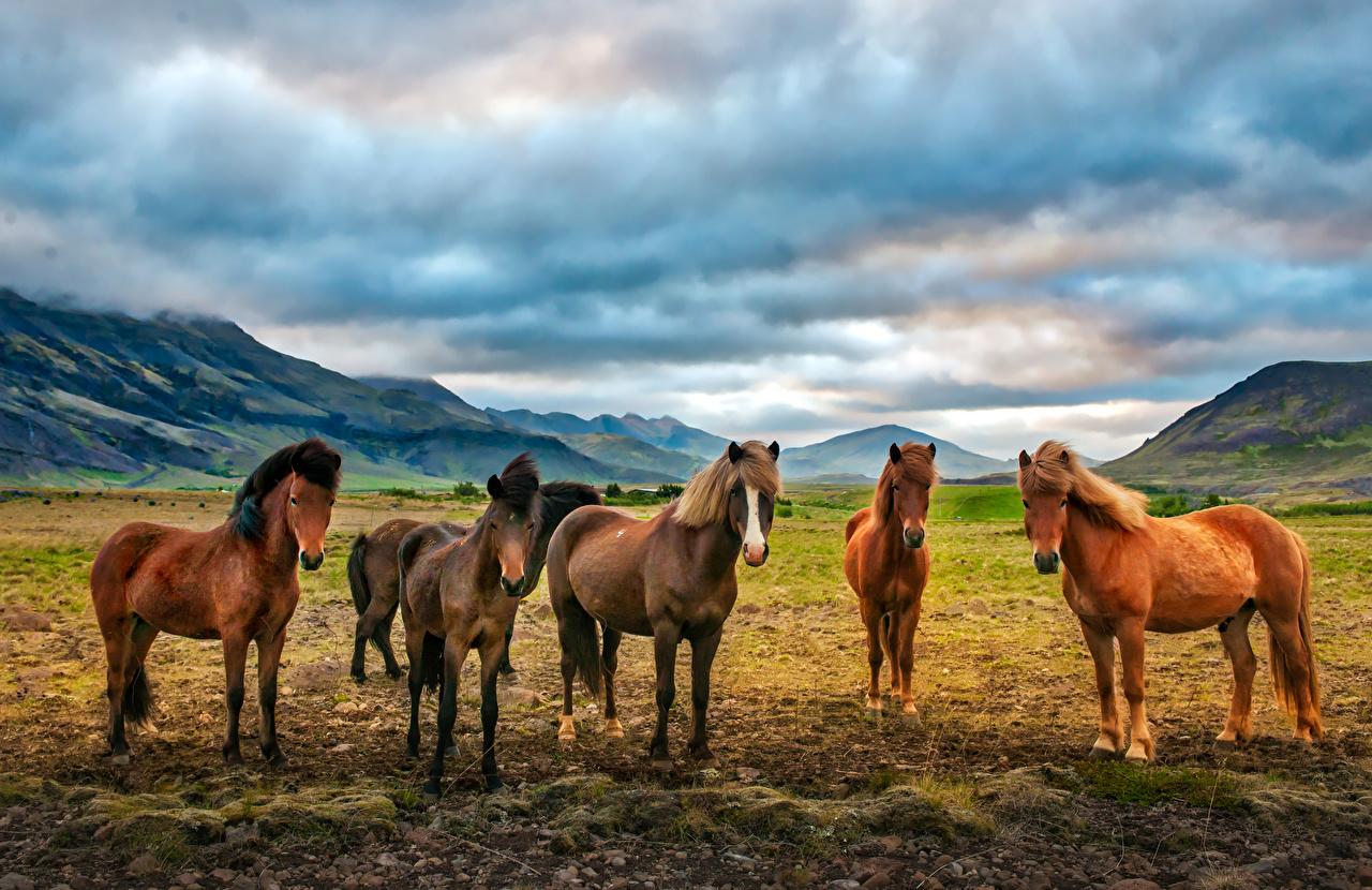 Fotos von Pferde Grünland Tiere Pferd Hauspferd ein Tier