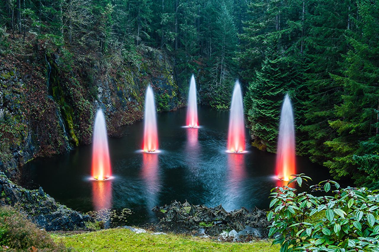、カナダ、公園、池、森林、Butchart Gardens、、自然、