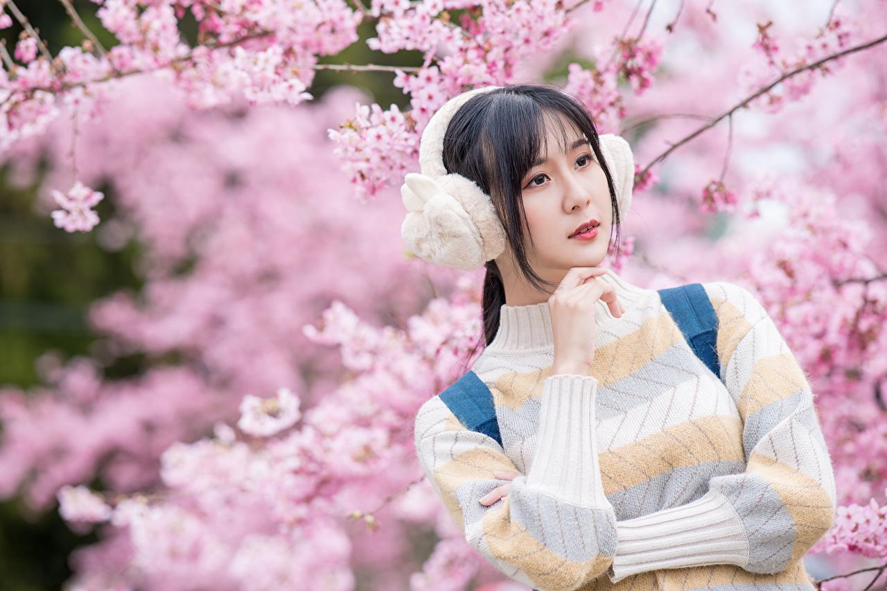 Foto Brünette Kopfhörer Bokeh Mädchens Asiaten Sweatshirt Hand Blühende Bäume unscharfer Hintergrund junge frau junge Frauen Asiatische asiatisches