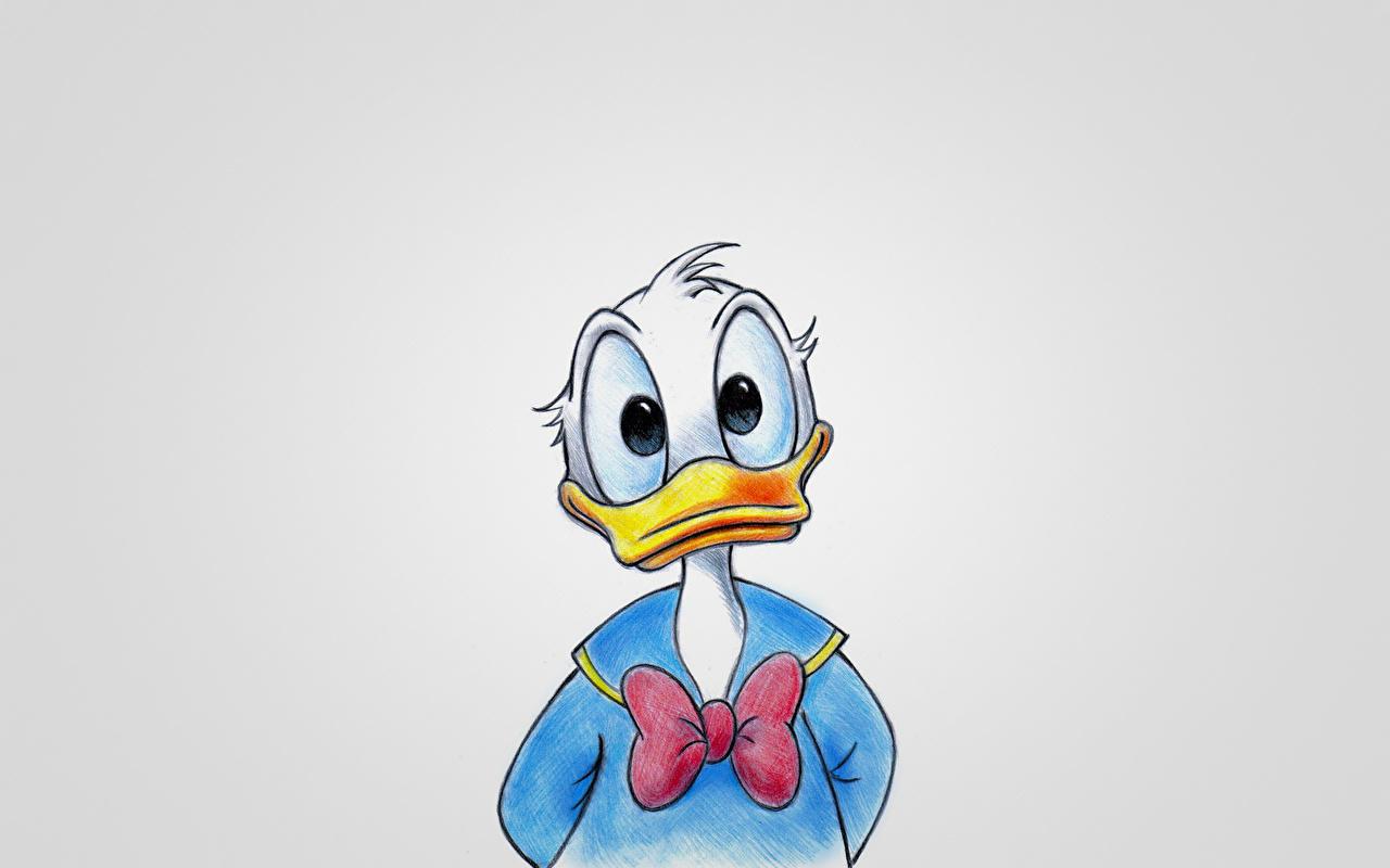 Fonds D Ecran Disney Donald Duck Dessine Noeud De Ruban