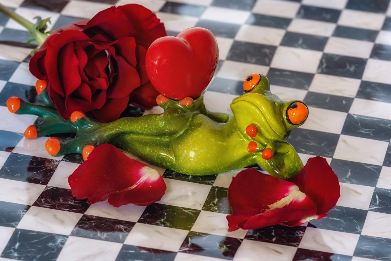 Photos frog Heart rose Petals maroon flower Frogs Roses burgundy dark red Wine color Flowers