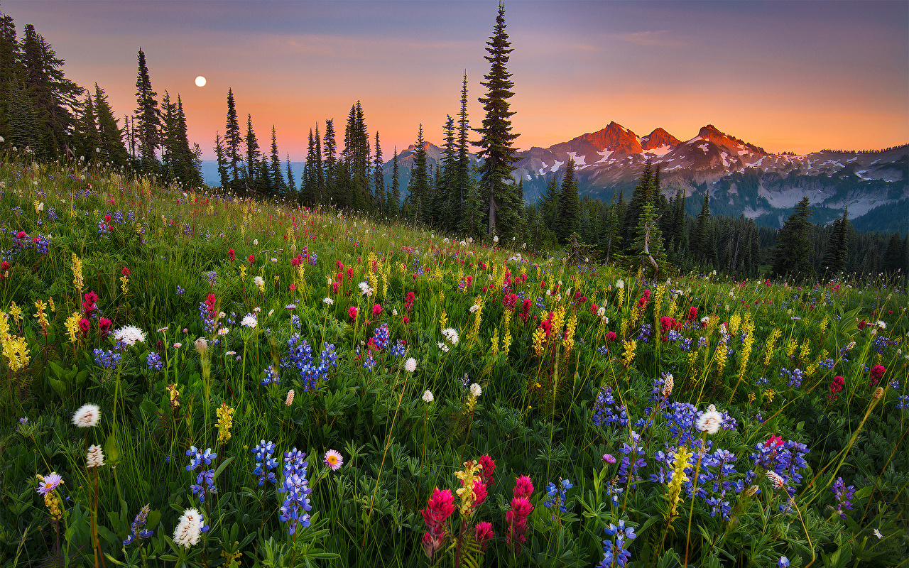Fonds d'ecran Montagnes Champ Prairies Photographie de paysage moonrise Nature Fleurs ...