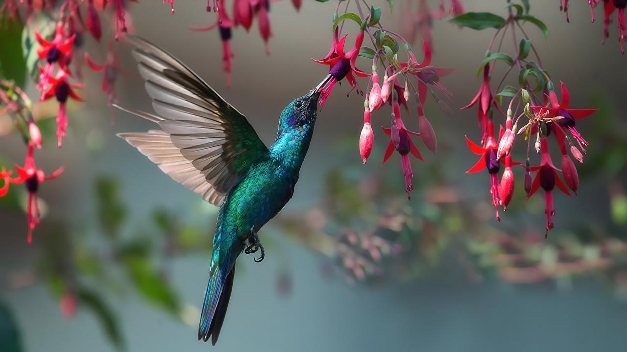 Bilder von Vögel Kolibris Tiere Vogel ein Tier