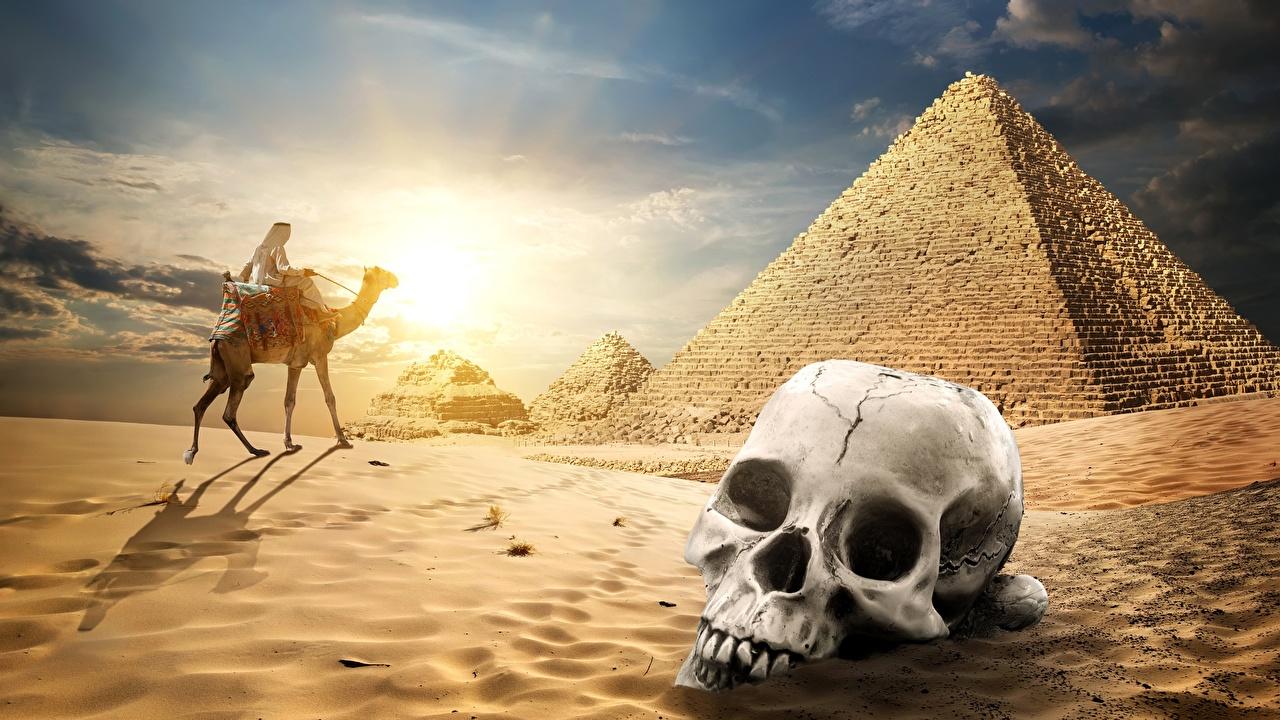 Bilder Kamele Schädel Natur Wüste Sand Pyramide bauwerk Cranium