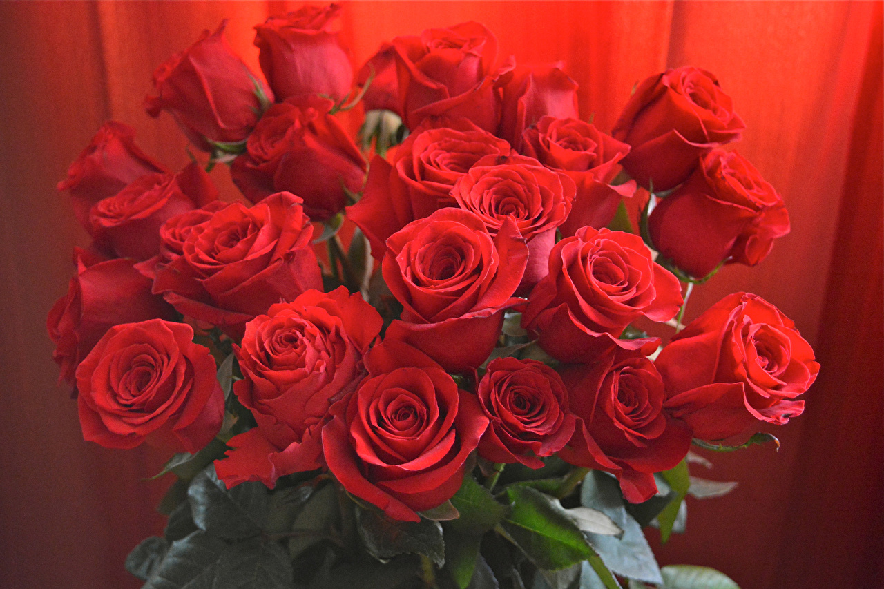 Photo bouquet Red Roses flower Closeup Bouquets rose Flowers