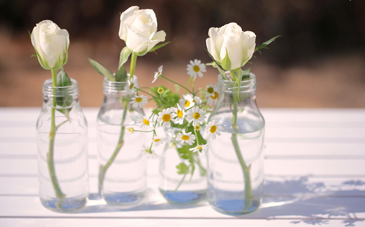 Image White Roses flower Camomiles Bottle Three 3 rose Flowers matricaria bottles