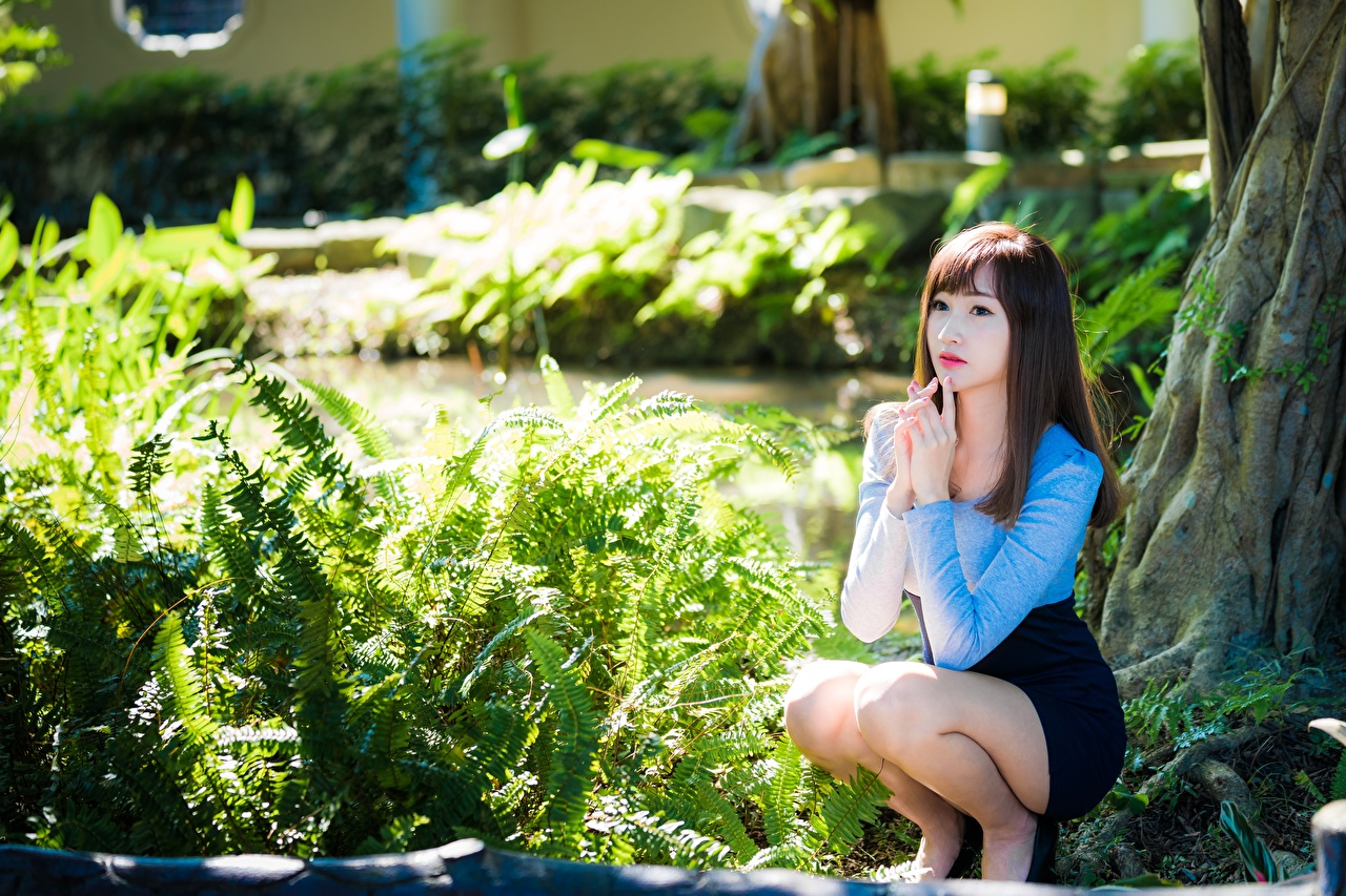 Picture Brown haired Bokeh young woman Legs Asian sit Hands Shrubs blurred background Girls female Asiatic Sitting Bush