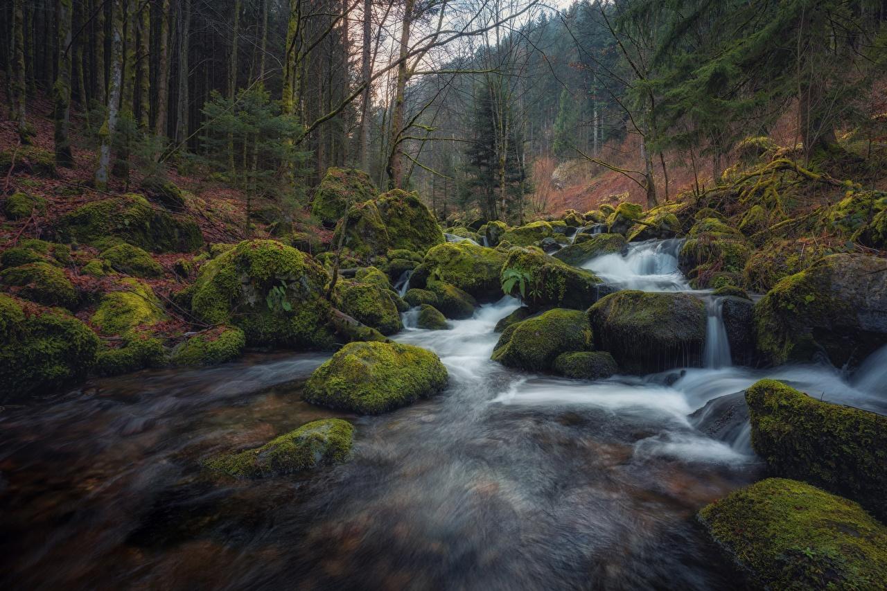 Fotos Deutschland Natur Wald Fluss Steine Laubmoose Bäume Wälder Stein Flusse