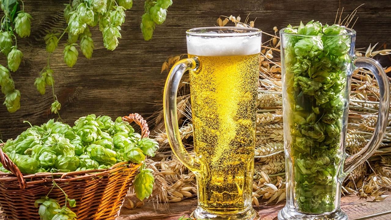 Bilder Bier Echter Hopfen Becher Lebensmittel Getränke