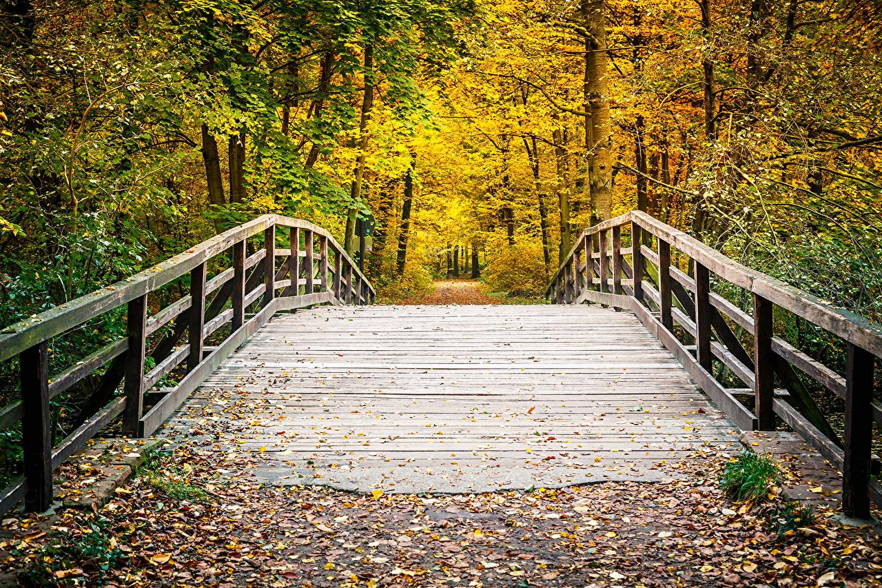 Sfondi del desktop Foglie ponte Natura Autunno parchi Alberi Stagione Foglia Ponti Parco