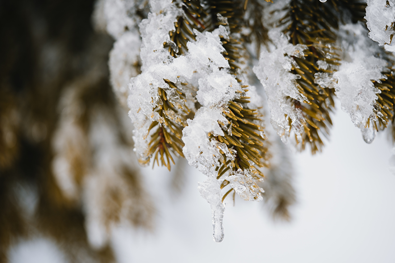 Fotos von unscharfer Hintergrund Eis Natur Fichten Schnee Ast Bokeh
