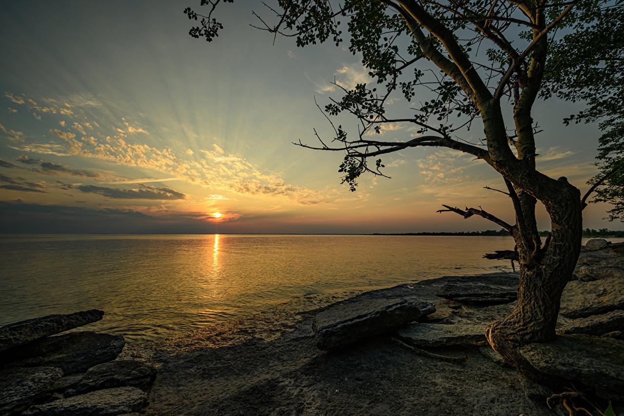 Photos Canada Ontario Nature Sunrises and sunsets Bay Coast Stones Trees sunrise and sunset stone