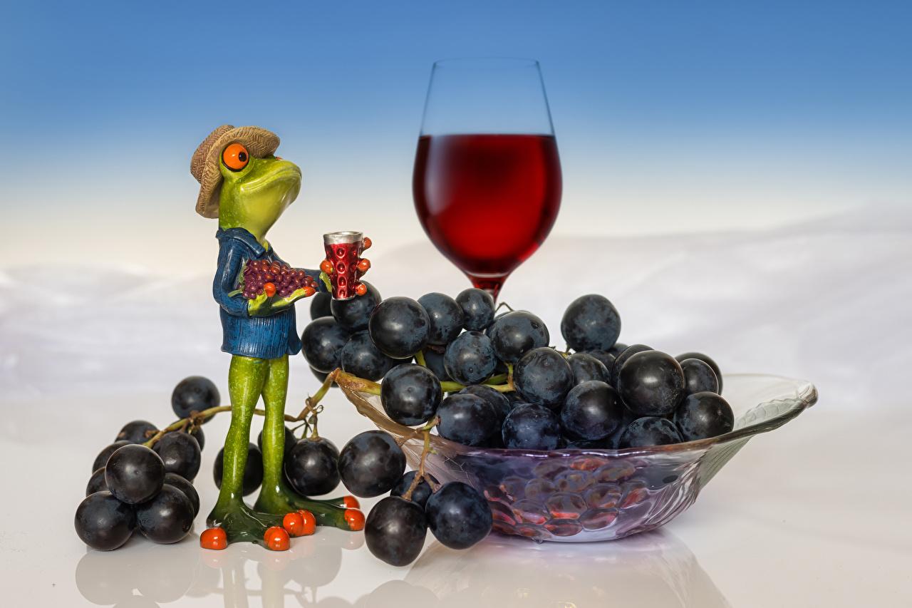 Fotos Frosche Wein Der Hut Trauben Weinglas Lebensmittel Weintraube das Essen