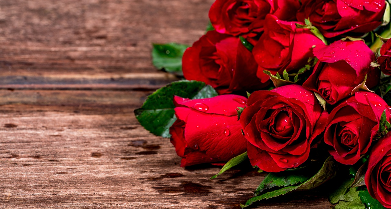 Picture Red Roses Flowers Closeup