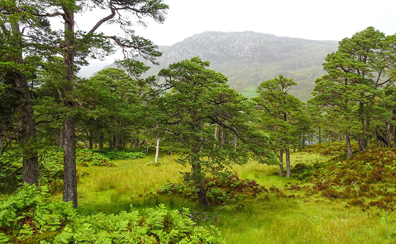 Fotos Schottland Achagate Natur Gebirge Gras Bäume Berg