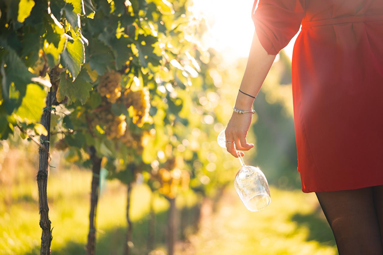Bilder von Bokeh Weinberg Mädchens Hand Weinglas Schmuck unscharfer Hintergrund Rebberg junge frau junge Frauen