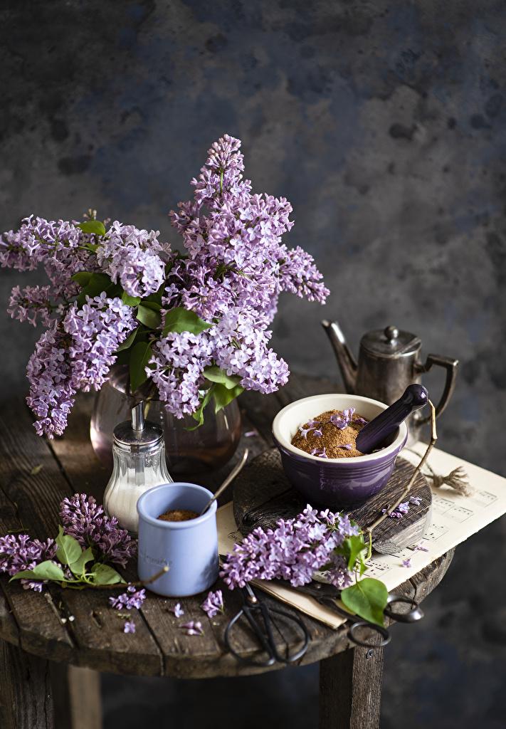 Foton Blommor syringa Mugg Grenar Stilleben  till Mobilen blomma bondsyren Syrensläktet