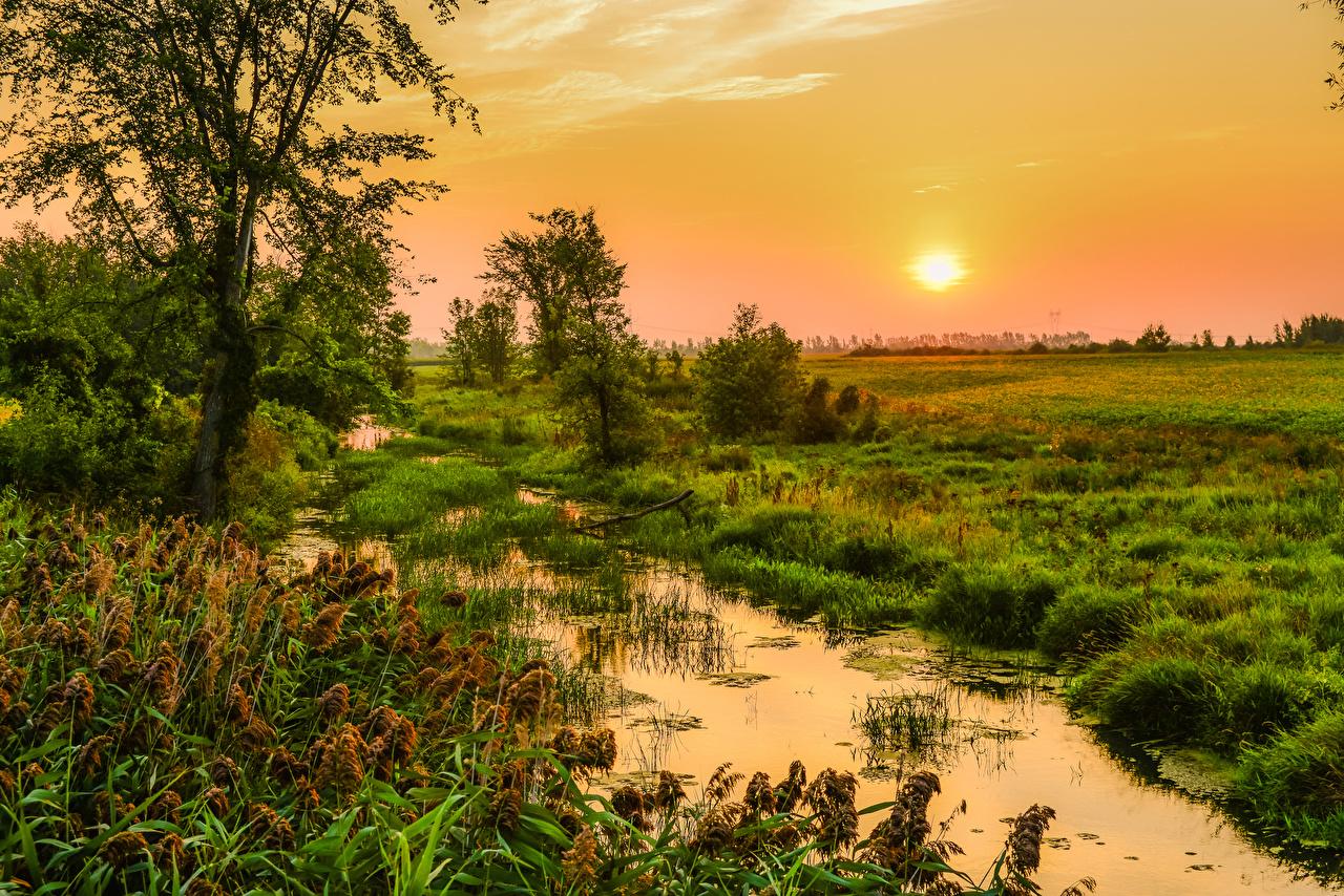 Bilder Natur Kanada Gras Sonne Quebec Morgendämmerung und Sonnenuntergang Sumpf Sonnenaufgänge und Sonnenuntergänge