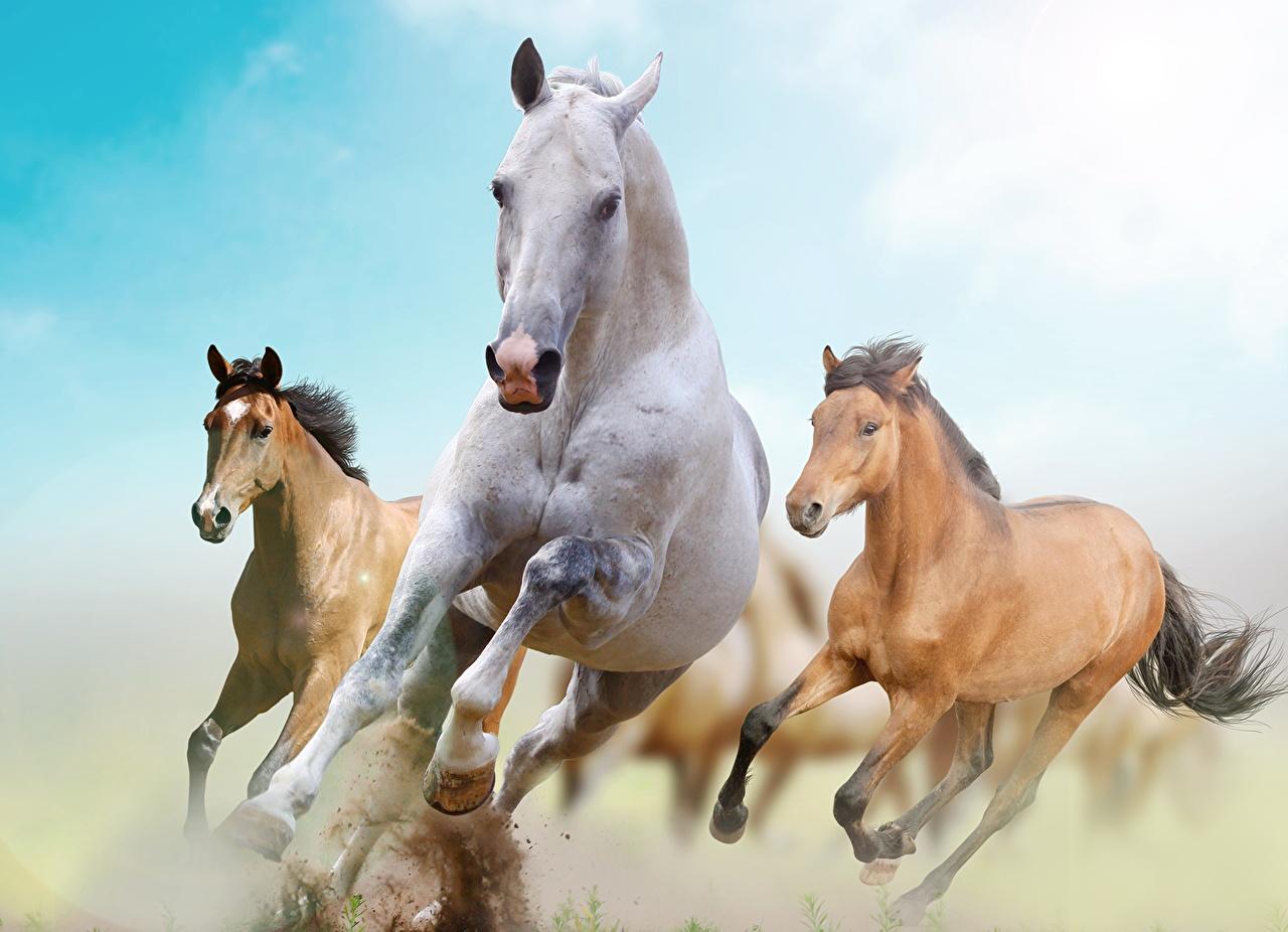 Tapety na pulpit Konie Bieg Zwierzęta koń Bieganie biegnący zwierzę