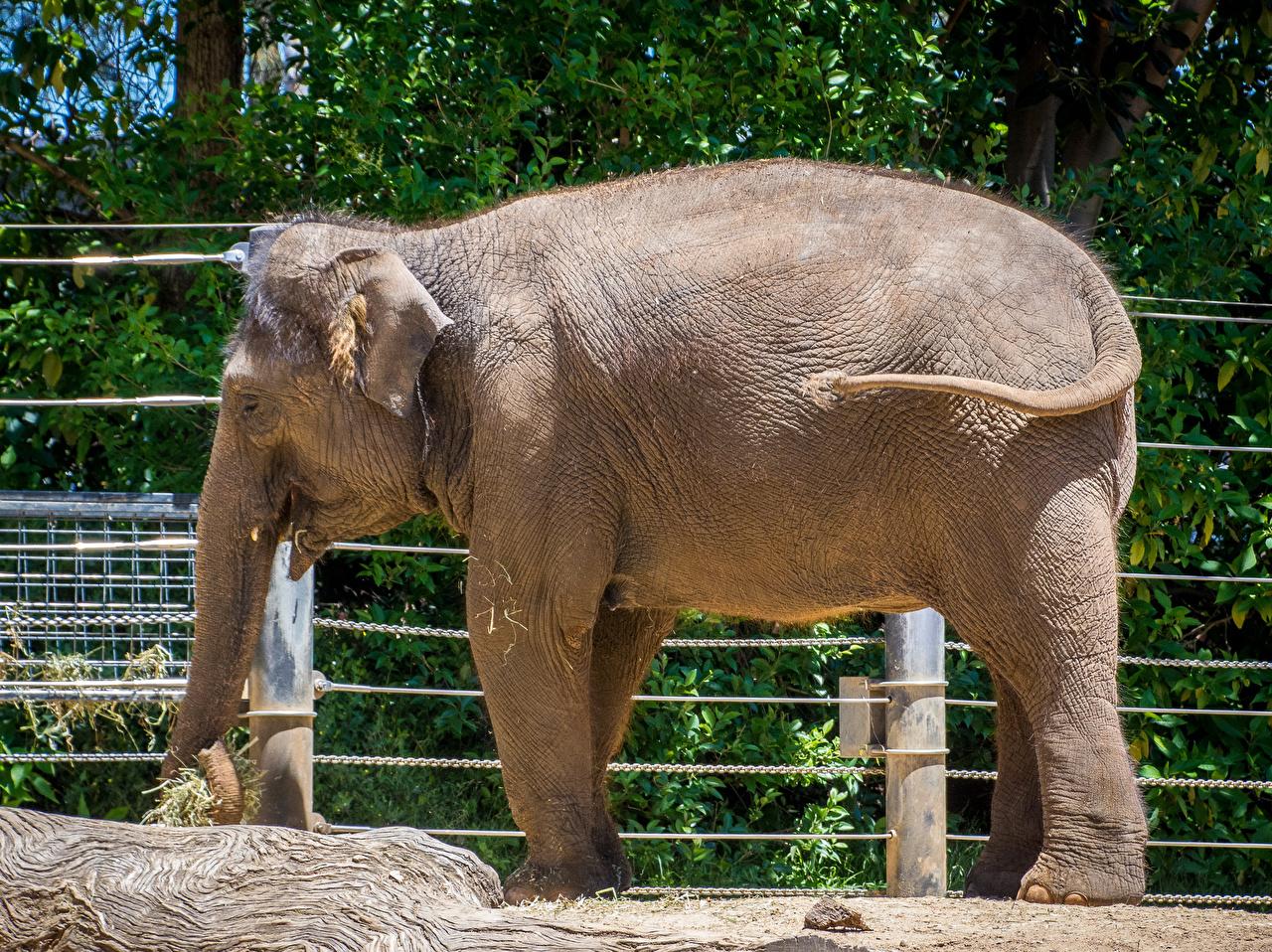 Photo Elephants Side Animals elephant animal