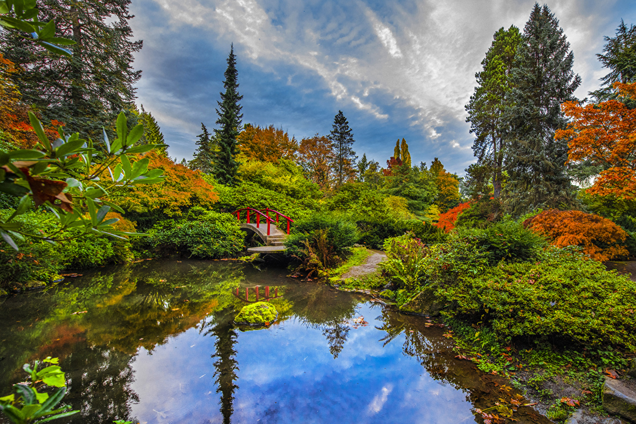 Picture Seattle USA Kubota Garden Nature Bridges Pond Gardens Bush Trees bridge Shrubs