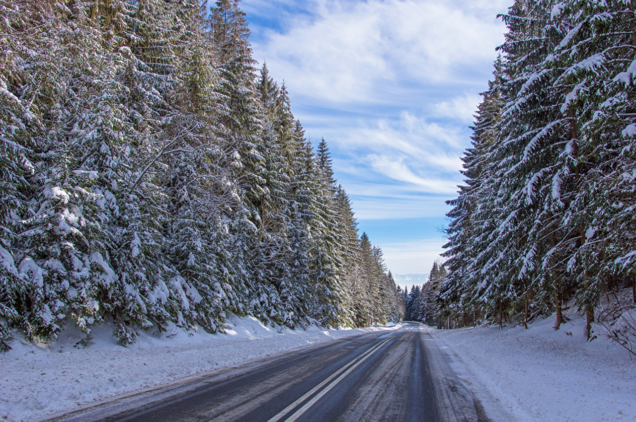 Images Poland Winter Spruce Nature Snow Roads forest Forests