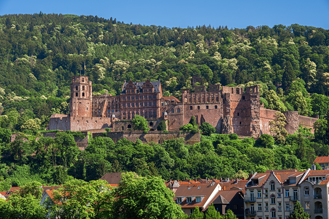 Images Germany Heidelberg castle forest Cities Castles Forests