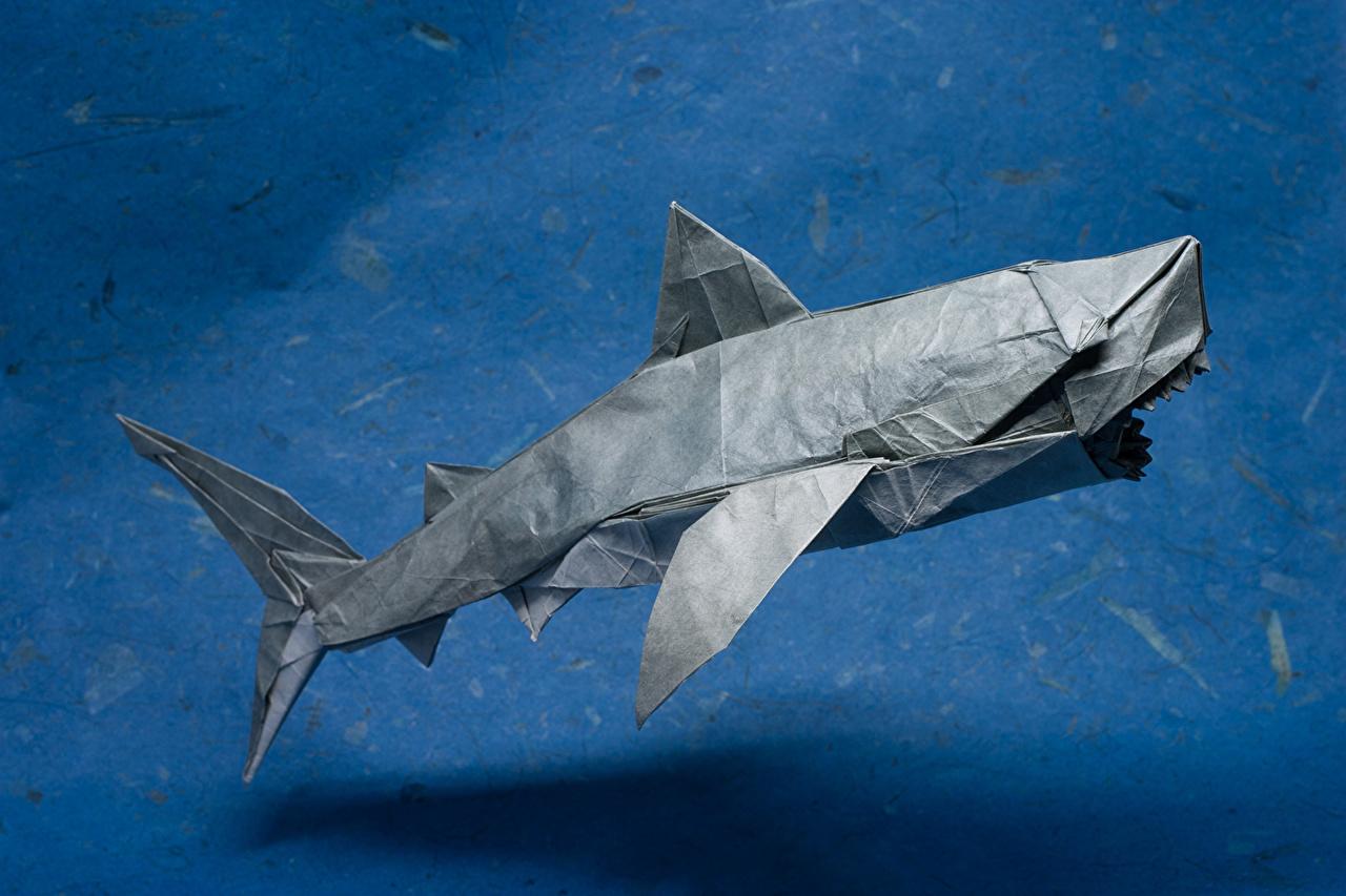 壁紙 サメ 折り紙 紙 ダウンロード 写真