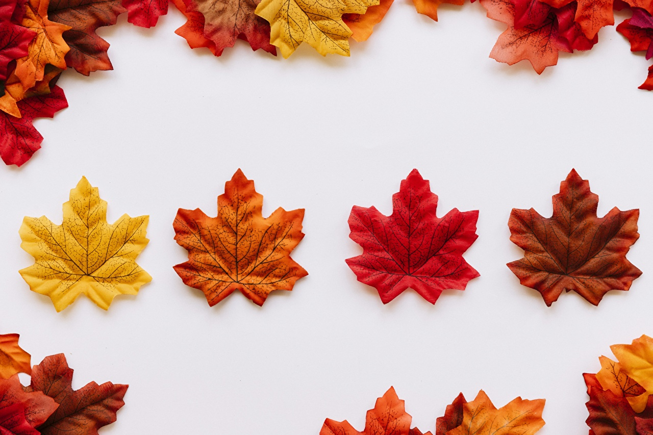 Desktop Wallpapers Foliage Maple Autumn Nature Template greeting card Leaf acer