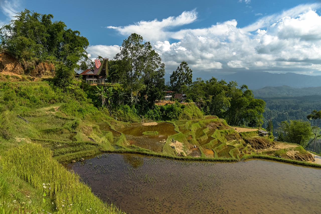 Wallpaper Indonesia Limbong Nature Hill Fields Tropics Water Grass Trees