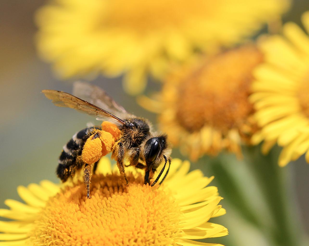 Image Bees animal Closeup Animals