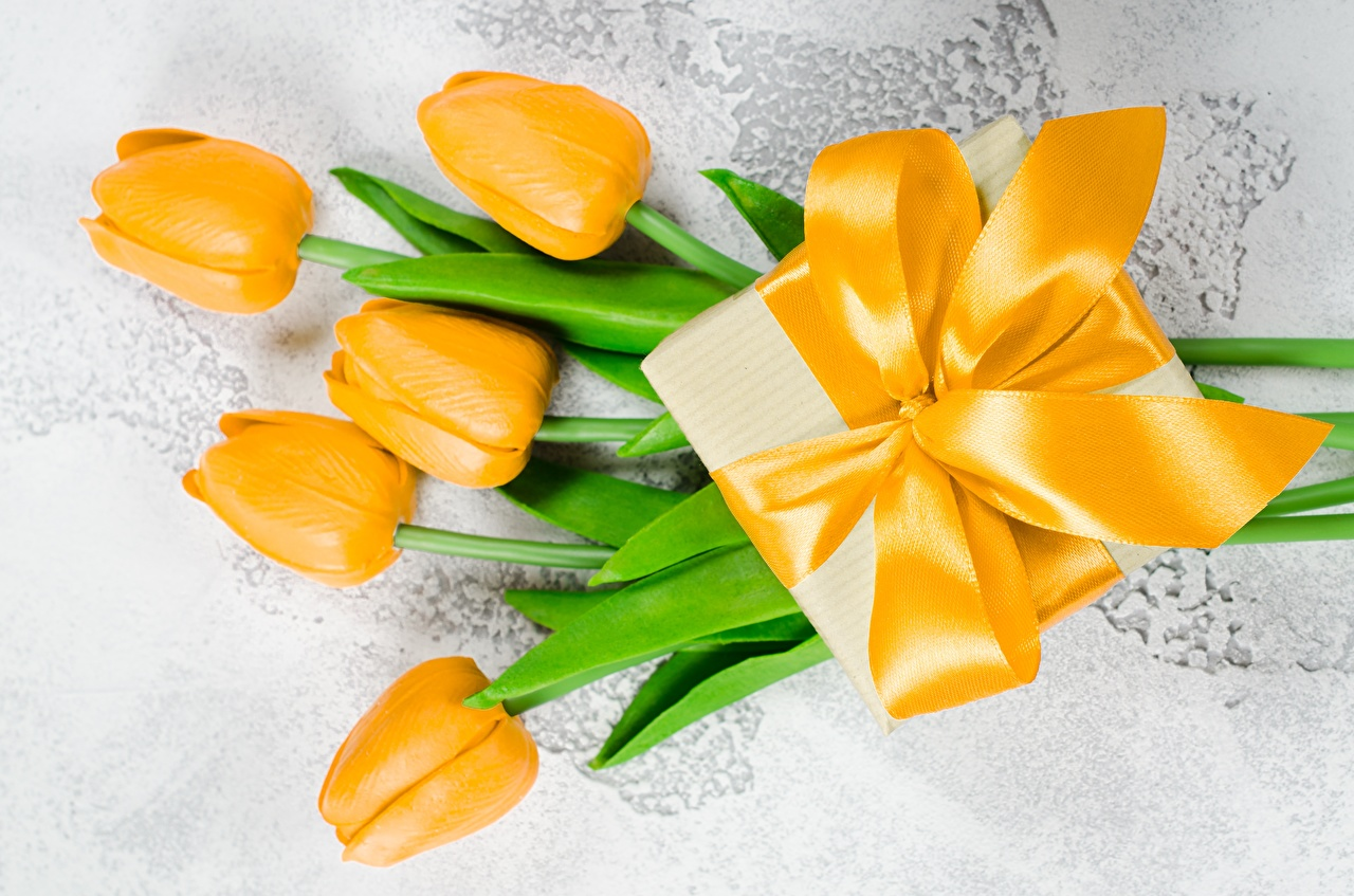 Photo Tulips Yellow Gifts Flowers bow knot tulip flower present Bowknot