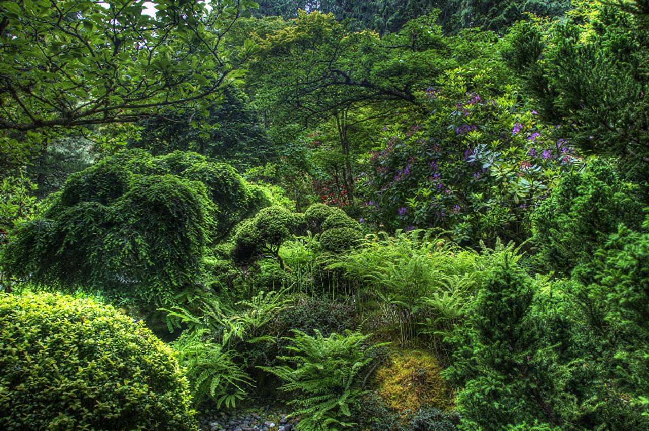 Foto Kanada Butchart Gardens Victoria Natur Park Bäume Strauch