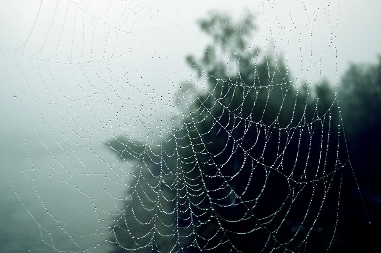 Desktop Wallpapers Spider Silk Autumn Nature Drops Closeup