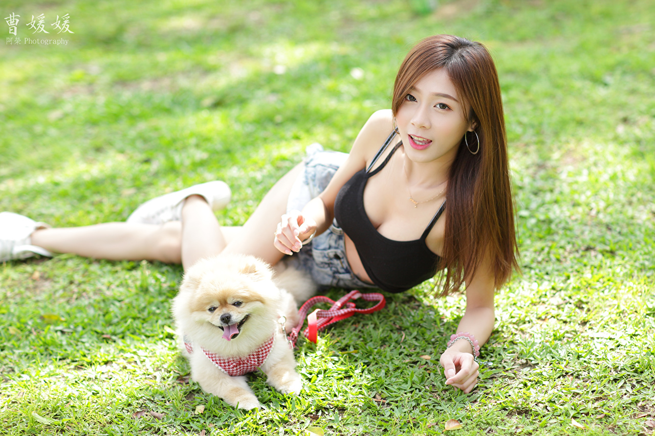 Wallpaper Spitz dog Brown haired Lying down young woman Asiatic Grass Shorts Dogs laying esting Girls female Asian
