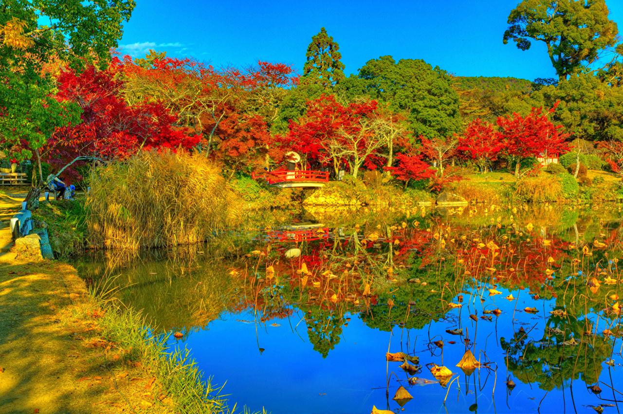 Photo Kyoto Japan Daikaku-ji HDR Autumn Nature park Pond Trees HDRI Parks
