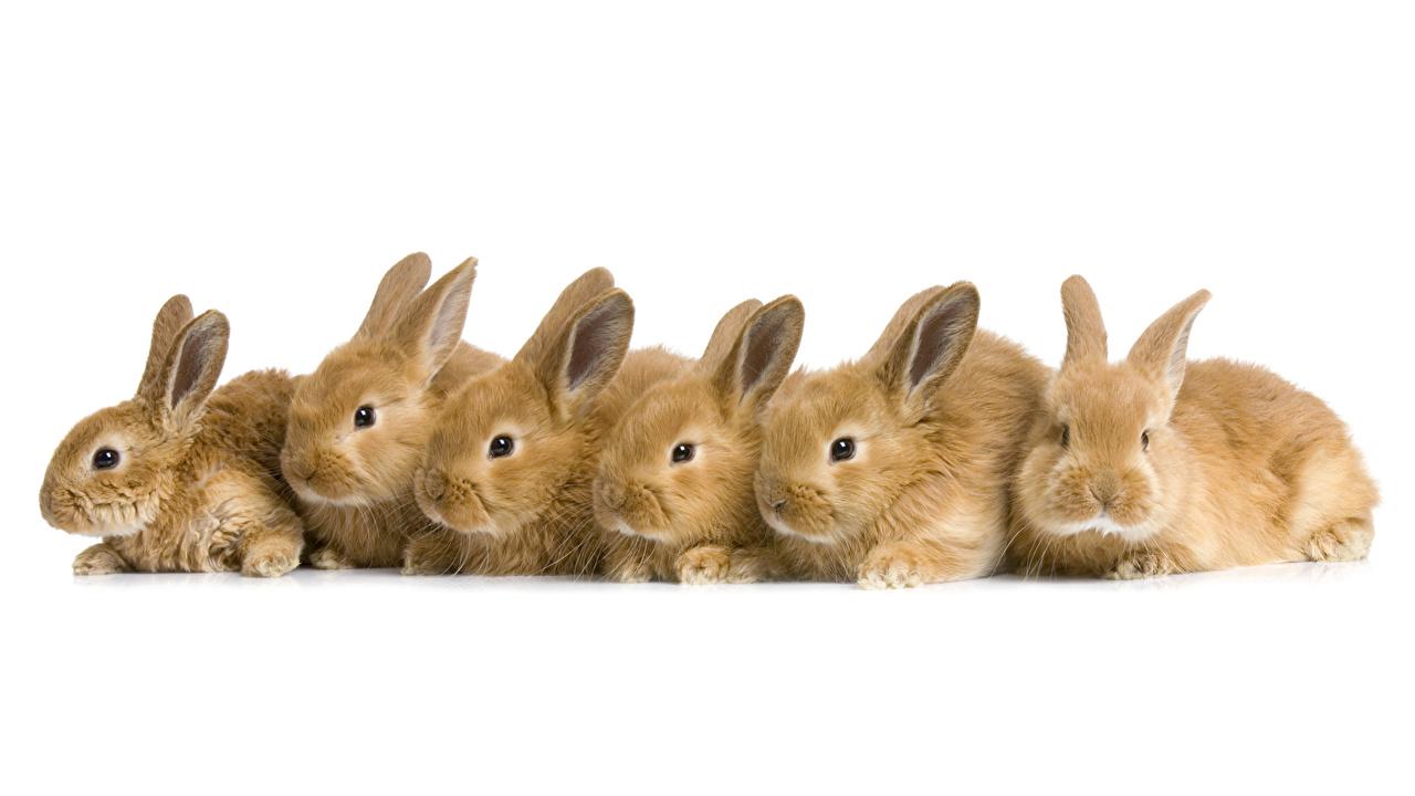 壁紙 ウサギ たくさん 動物 ダウンロード 写真