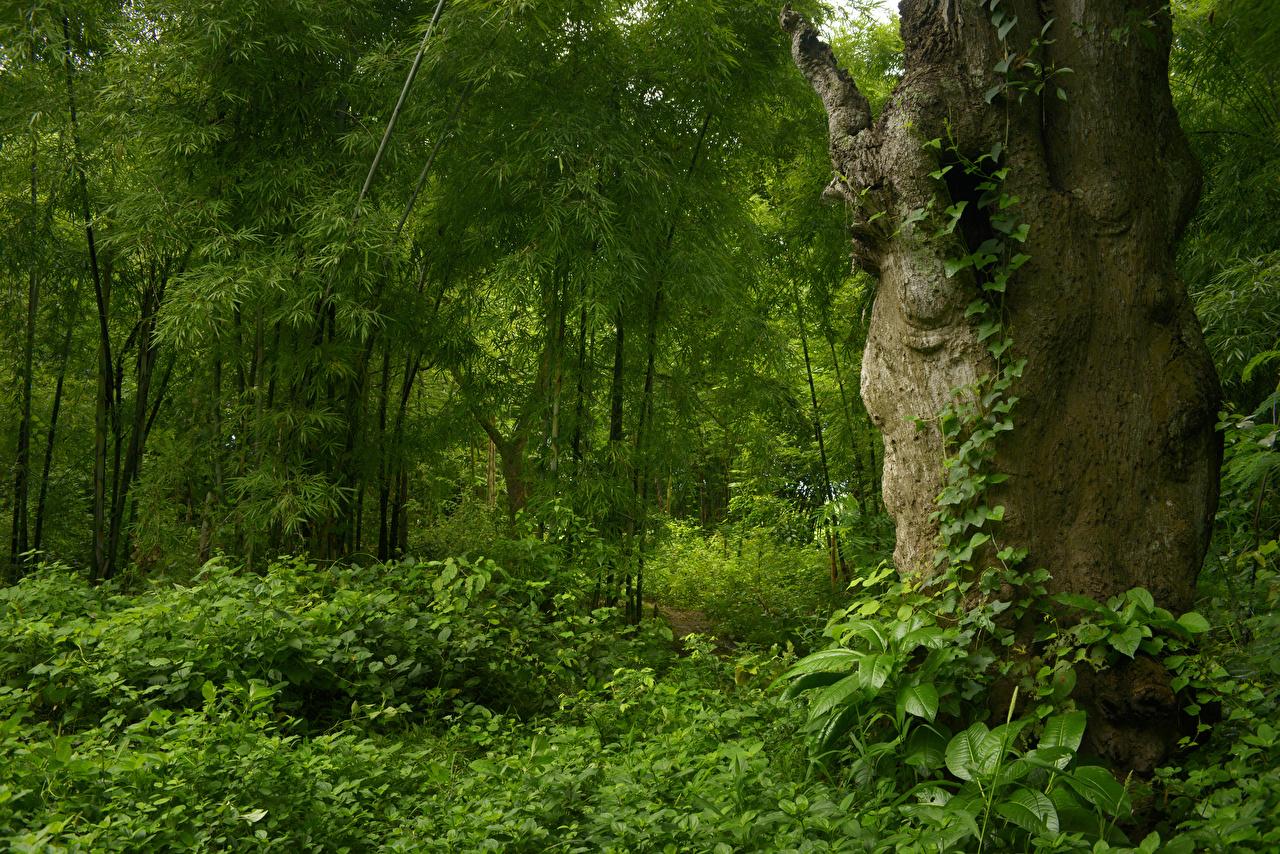 Foto Jungle Natur Tropen Wälder Baumstamm Bäume Strauch