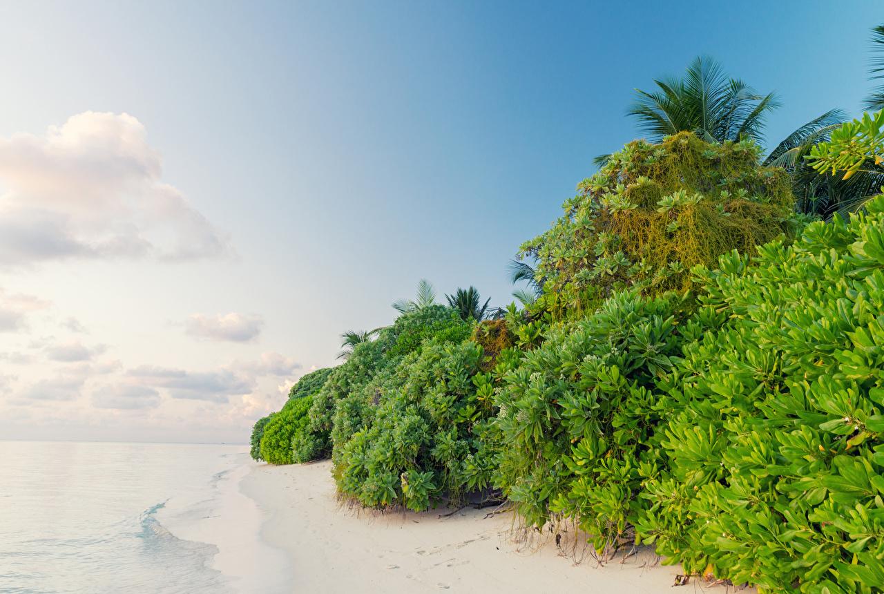 Bilder von Malediven Thoddoo Natur Tropen Küste Strauch