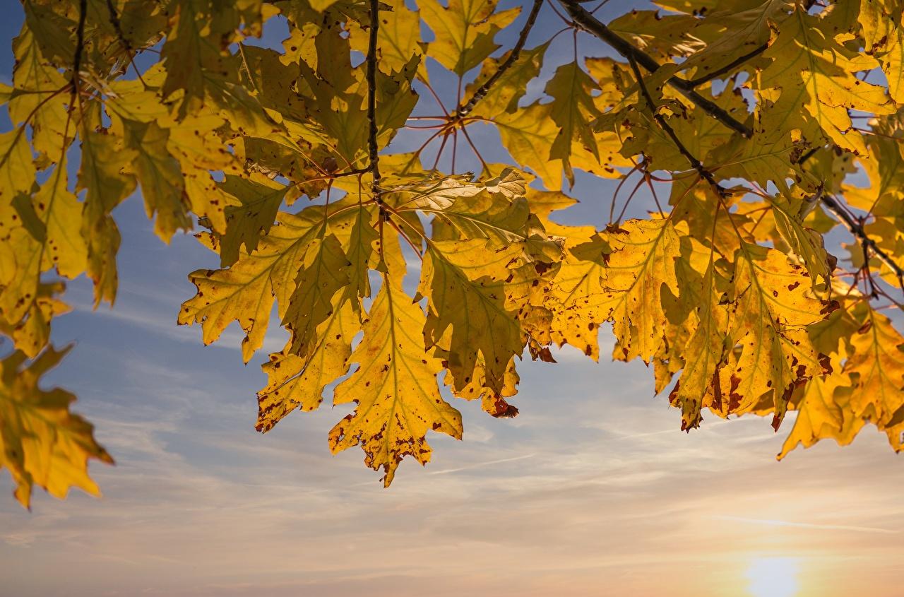 Image Foliage Oak Autumn Nature Branches Leaf