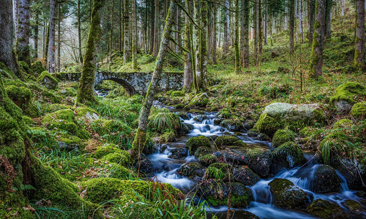 Bilder von Frankreich Alsace Bach Natur Wald Steine Laubmoose Bäche Wälder Stein