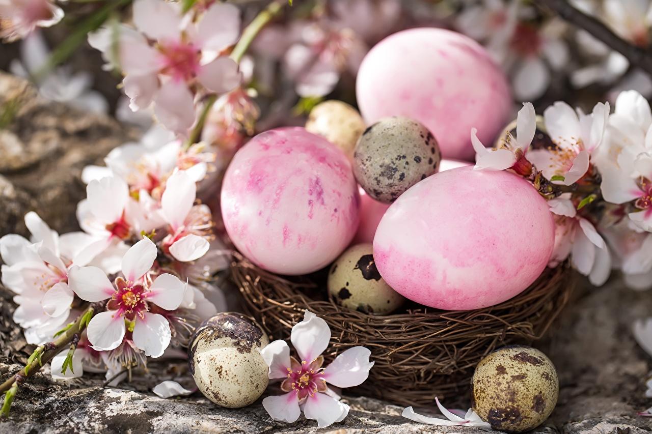 Photo Easter egg Nest flower Eggs Flowers