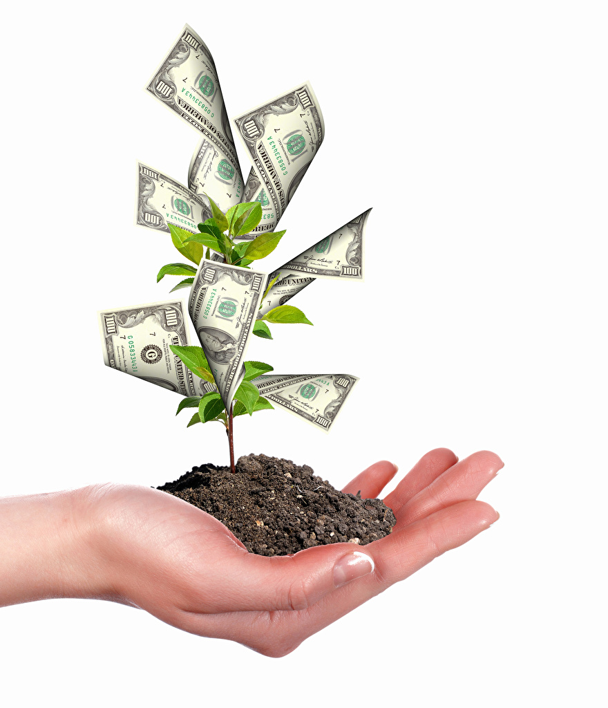 Wallpaper Paper money Soil Creative Money Hands Trees White background Banknotes