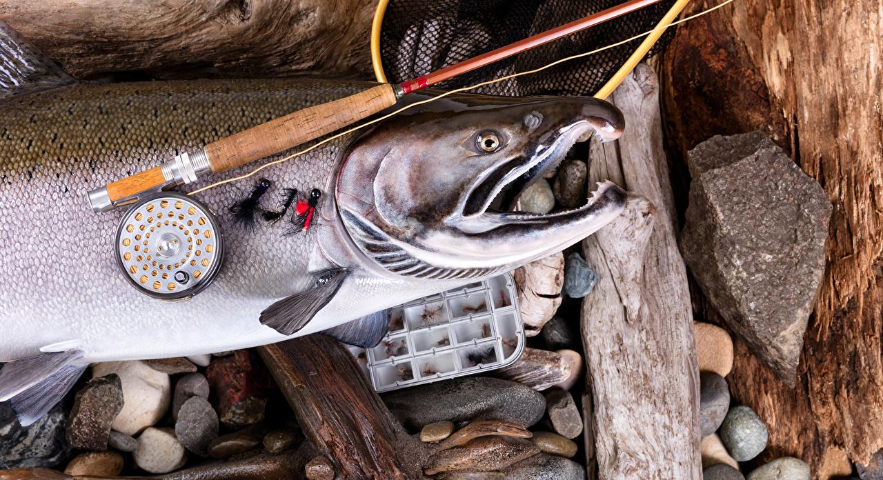Pesca Peixes - Alimentos Vara de pesca Pedras Salmão esporte, esportes, pedra Desporto