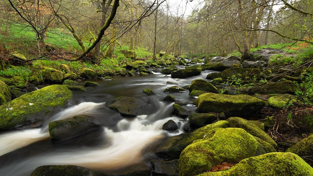 Picture England Yorkshire brook Nature Moss stone Creek Stream Creeks Streams Stones