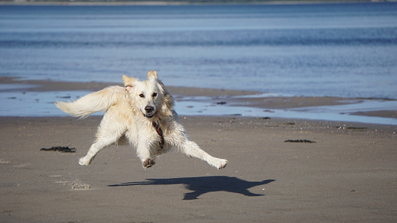 Picture Humor Dogs Running Funny White funny dog Run