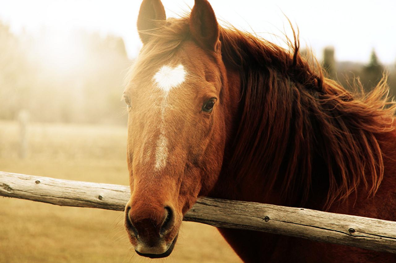 Foto's Paarden Hoofd een dier paard Dieren
