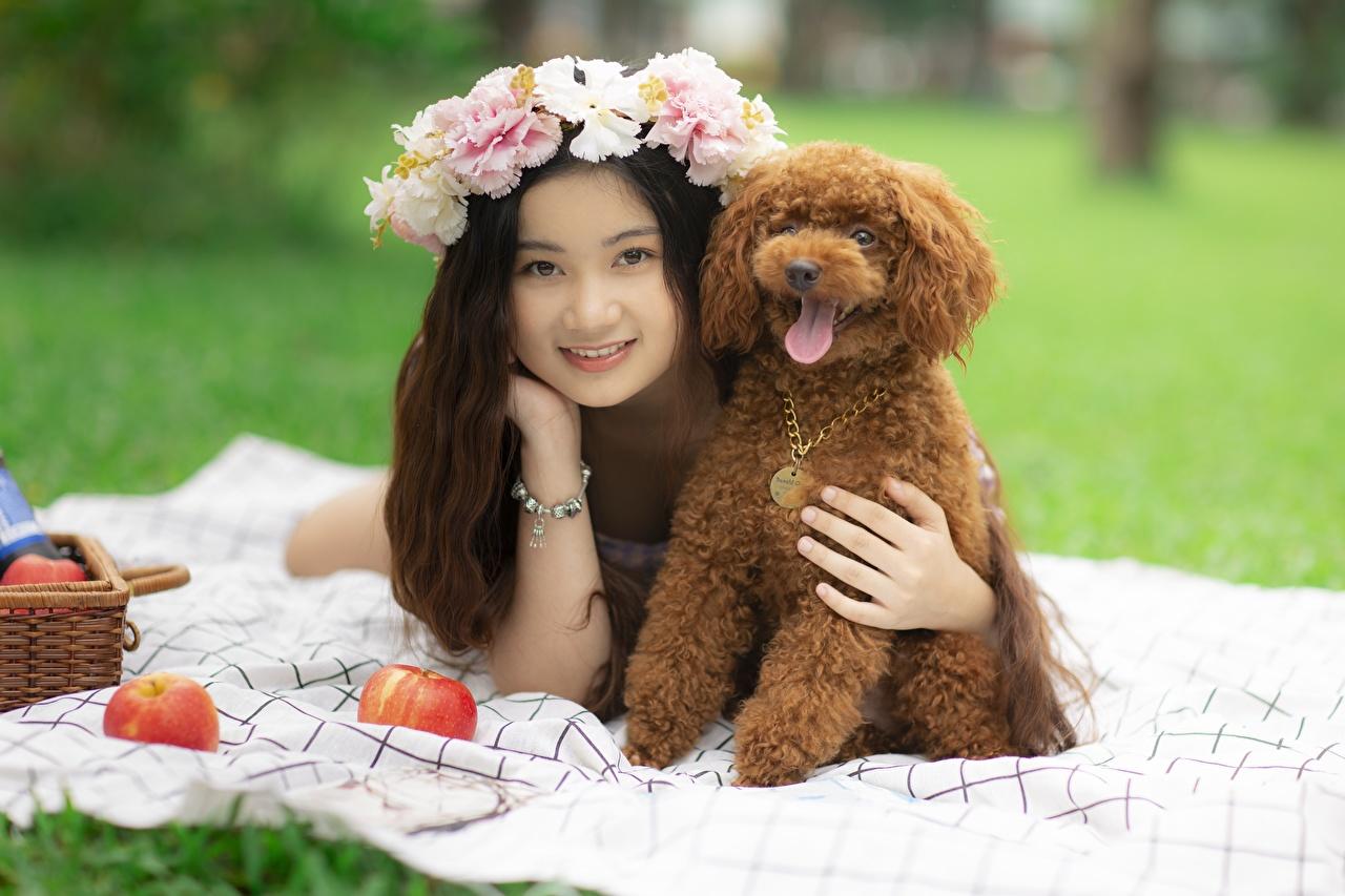 Asiático Cão Grinalda Deitado Poodle Sorrir jovem mulher, mulheres jovens, moça, cães, cachorro, asiática, deitada, mentindo Meninas