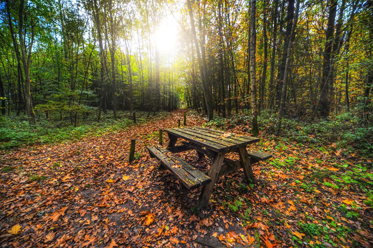 、森林、秋、木、木の葉、テーブル、ベンチ、自然