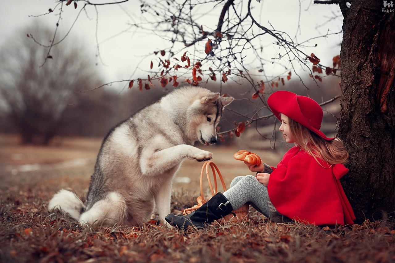 Fotos von Siberian Husky Kleine Mädchen Hunde Rotkäppchen Anna Ipatieva Kinder sitzen Tiere hund kind sitzt Sitzend ein Tier
